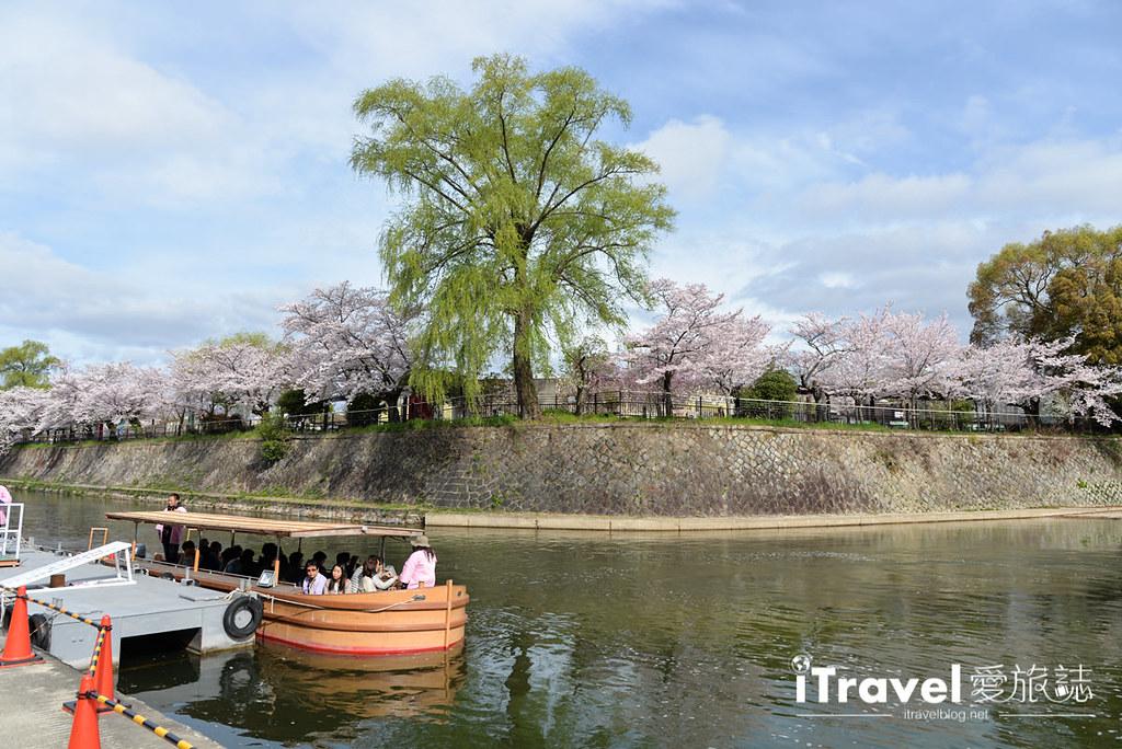 京都賞櫻景點 岡崎疏水道 (4)