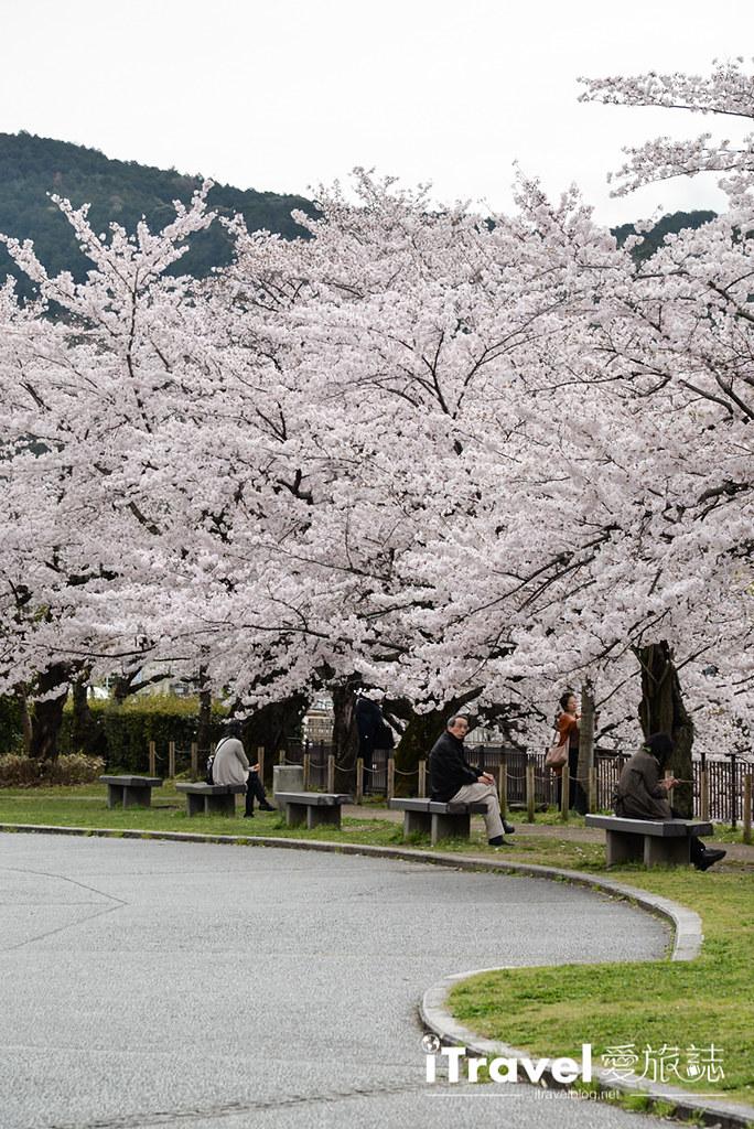 京都赏樱景点 冈崎疏水道 (40)
