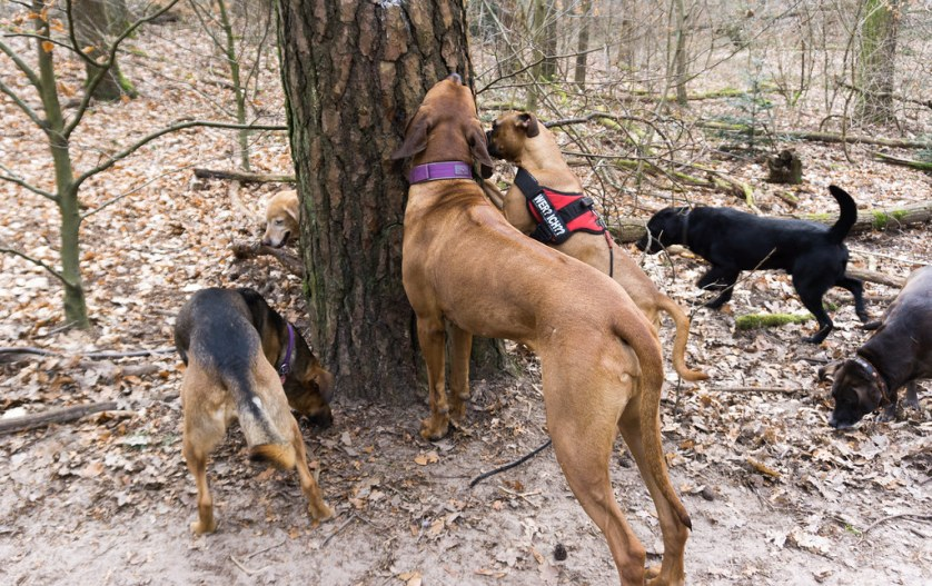 Dogs Nibbling on Treats Placed on the Tree. My Airbnb Experience in Grunewald Forest in Berlin, Germany, March 6, 2018.