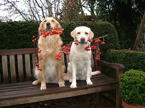 two dogs holding little apple branches