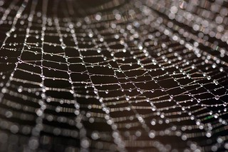 Dew Drop Spider Web