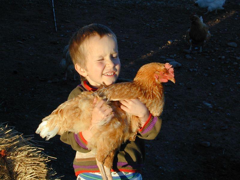 kid holding chicken