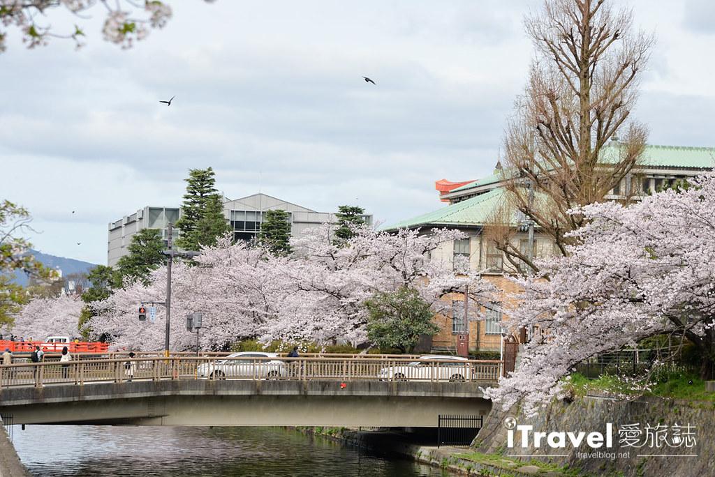 京都賞櫻景點 岡崎疏水道 (27)