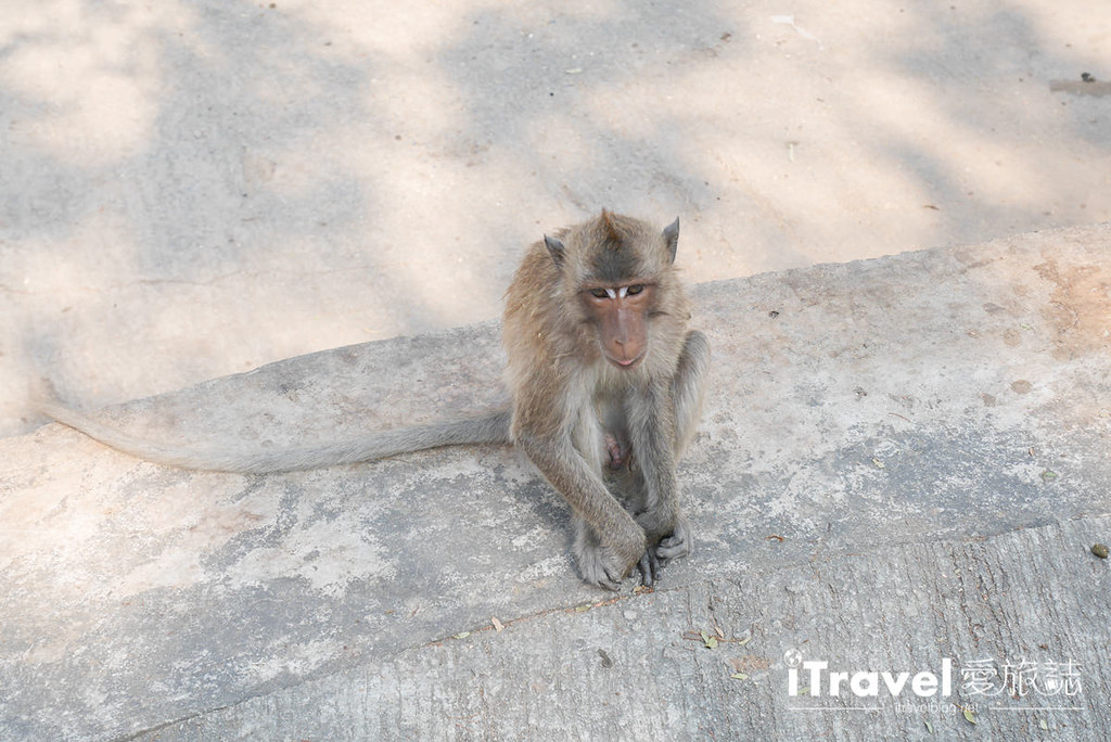 华欣景点推荐 考佬寺Wat Khao Takiap (33)