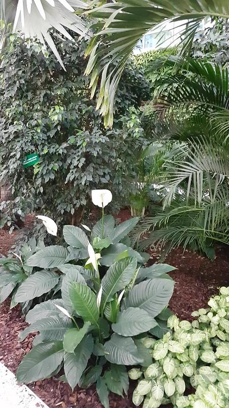 paragraphwinter garden 2