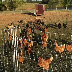 From our farm blog: It matters how we treat the earth. ~ We are to be good stewards and leave the land better than we found it. It matters how we raise our animals. ~ Our animals should be allowed to express their natural proclivities. It matters how we t