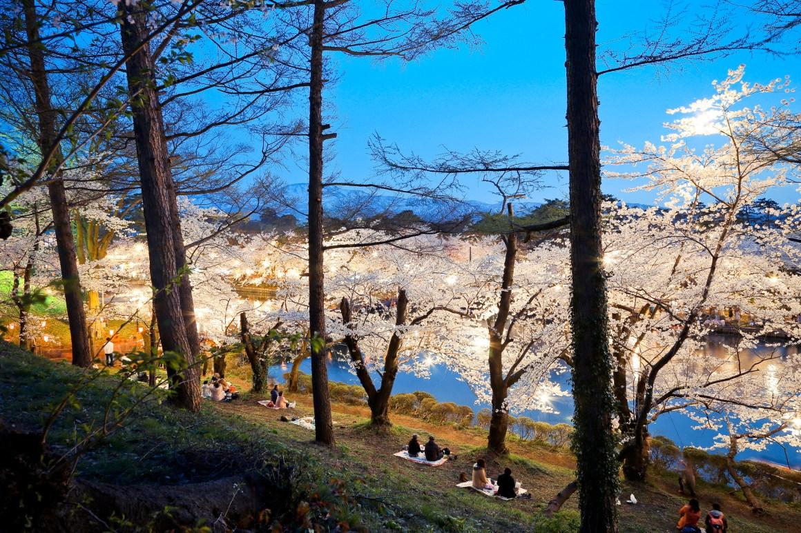 新潟県上越市 高田公園 櫻花