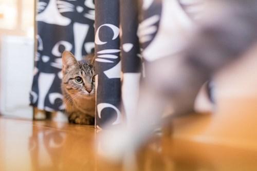 アトリエイエネコ Cat Photographer 40261583844_e884b2f031 1日1猫!保護猫カフェみーちゃ・みーちょ その1 未分類  里親様募集中 猫写真 猫 子猫 大阪 初心者 写真 保護猫カフェ 保護猫 カメラ みーちゃ・みーちょ Kitten Cute cat