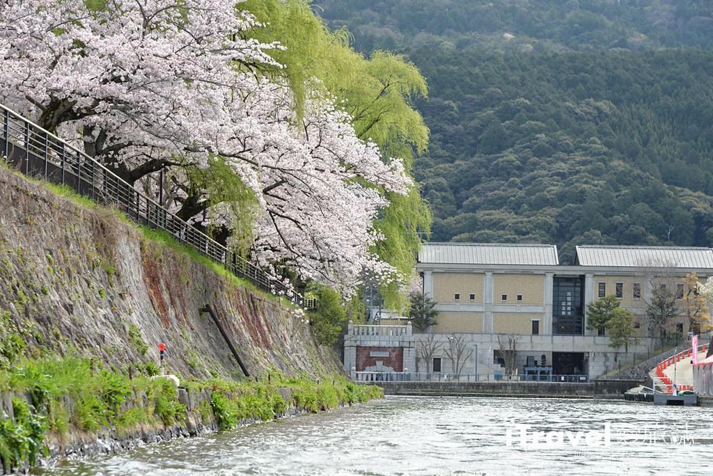 京都赏樱景点 冈崎疏水道 (11)