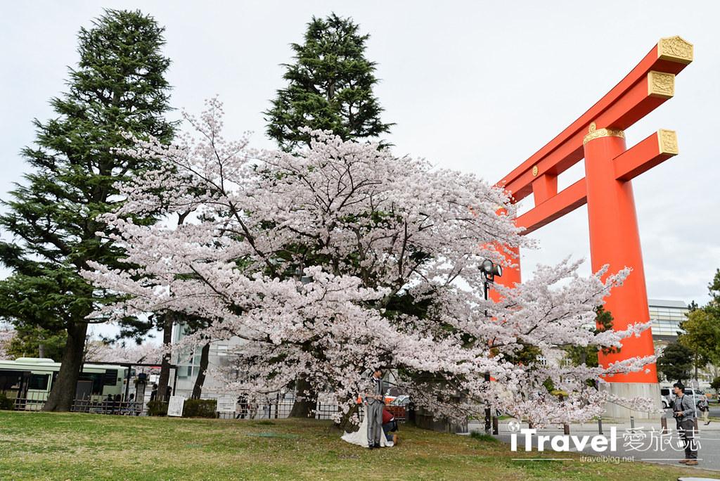 京都赏樱景点 冈崎疏水道 (39)