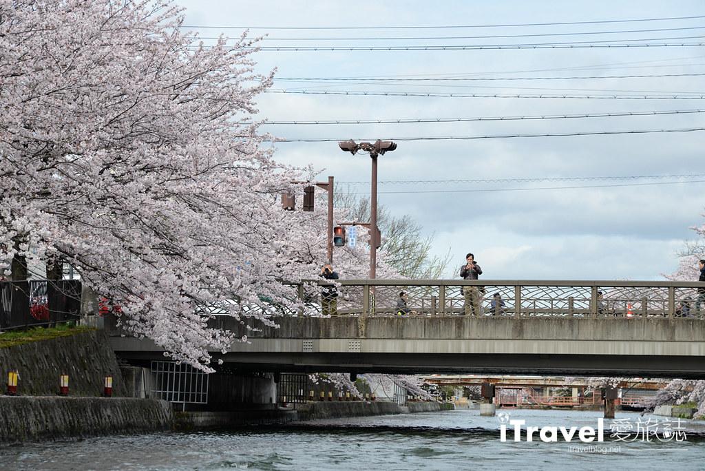 京都賞櫻景點 岡崎疏水道 (22)