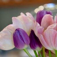 0324 Tulips