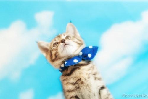 アトリエイエネコ Cat Photographer 26999645987_fab9e2f79d 1日1猫!ニャンとぴあキャッツ 里親様募集中のハタくん♪ 1日1猫!  里親様募集中 猫写真 猫カフェ 猫 子猫 大阪 初心者 写真 保護猫カフェ 保護猫 ニャンとぴあ スマホ キジ猫 カメラ おおさかねこ倶楽部 Kitten Cute cat