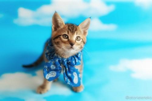 アトリエイエネコ Cat Photographer 26999674697_909189aa49 1日1猫!ニャンとぴあキャッツ 里親様募集中のサンマくん♪ 1日1猫!  里親様募集中 猫写真 猫カフェ 猫 子猫 大阪 初心者 写真 保護猫カフェ 保護猫 ニャンとぴあ スマホ キジ猫 カメラ おおさかねこ倶楽部 Kitten Cute cat