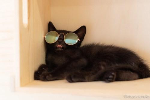 アトリエイエネコ Cat Photographer 43067575212_bec5140921 1日1猫!おおさかねこ俱楽部 里親様募集中 魔法使いのバジルちゃん♪ 1日1猫!  黒猫 里親様募集中 猫写真 猫カフェ 猫 子猫 大阪 初心者 写真 保護猫カフェ 保護猫 ニャンとぴあ スマホ キジ猫 カメラ おおさかねこ倶楽部 Kitten Cute cat