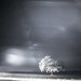 nightscape infrared