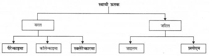 NCERT Solutions for Class 9 Science Chapter 6 (Hindi Medium) 8