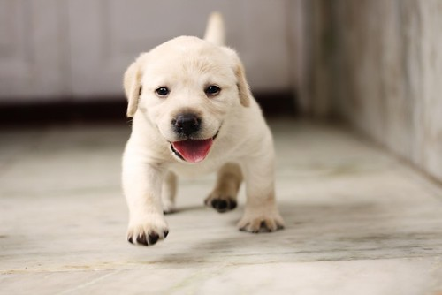 幸せな育て方をされた子犬