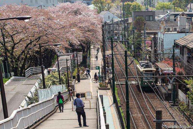 Linea-Toden-Arakawa-Tokyo-Sakura-Tram-23