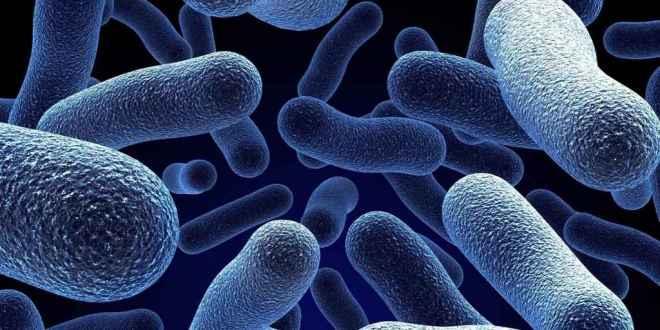 super_bactéries_2018