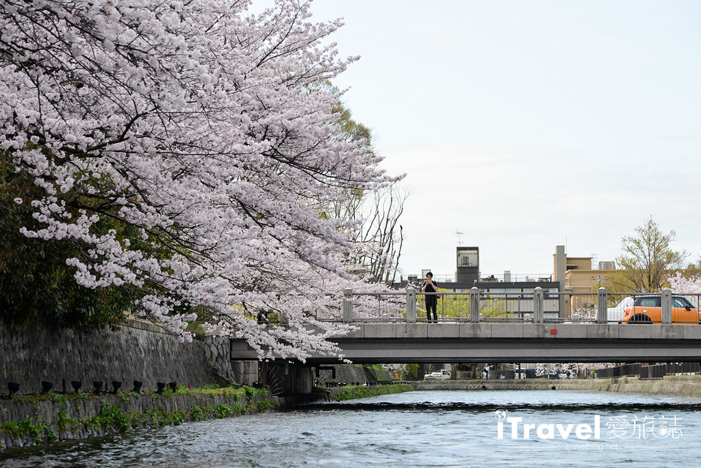 京都賞櫻景點 岡崎疏水道 (15)