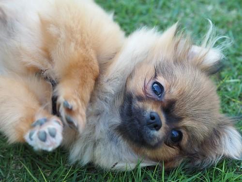 幸せな育て方を受けてきた犬