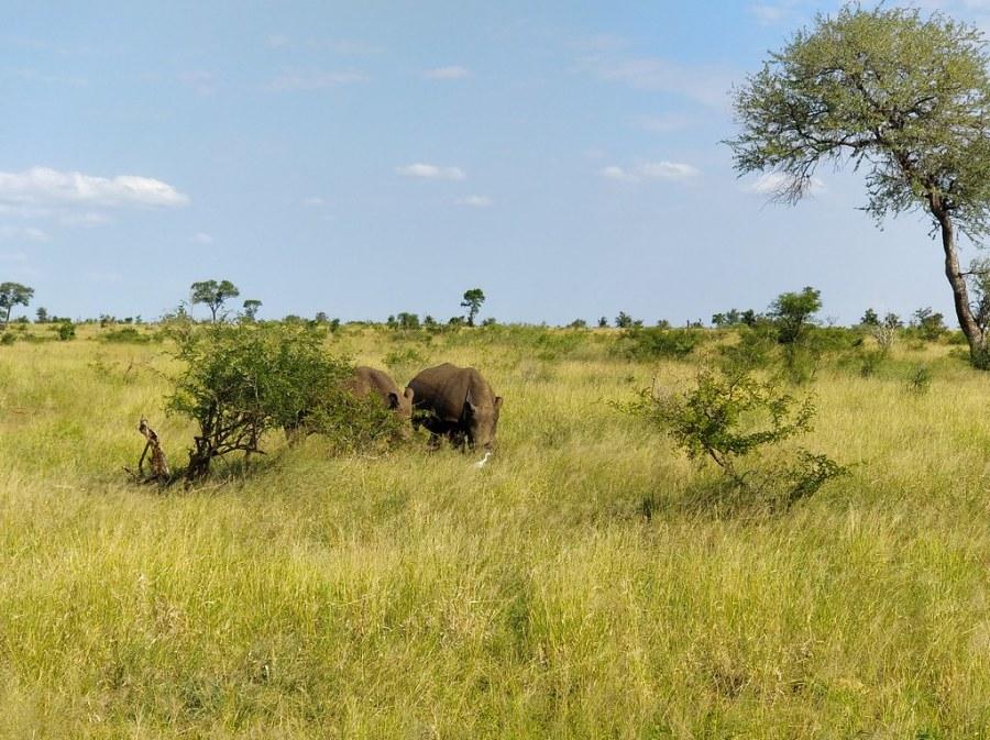 Kruger National Park South Africa Travel Blog Hippo
