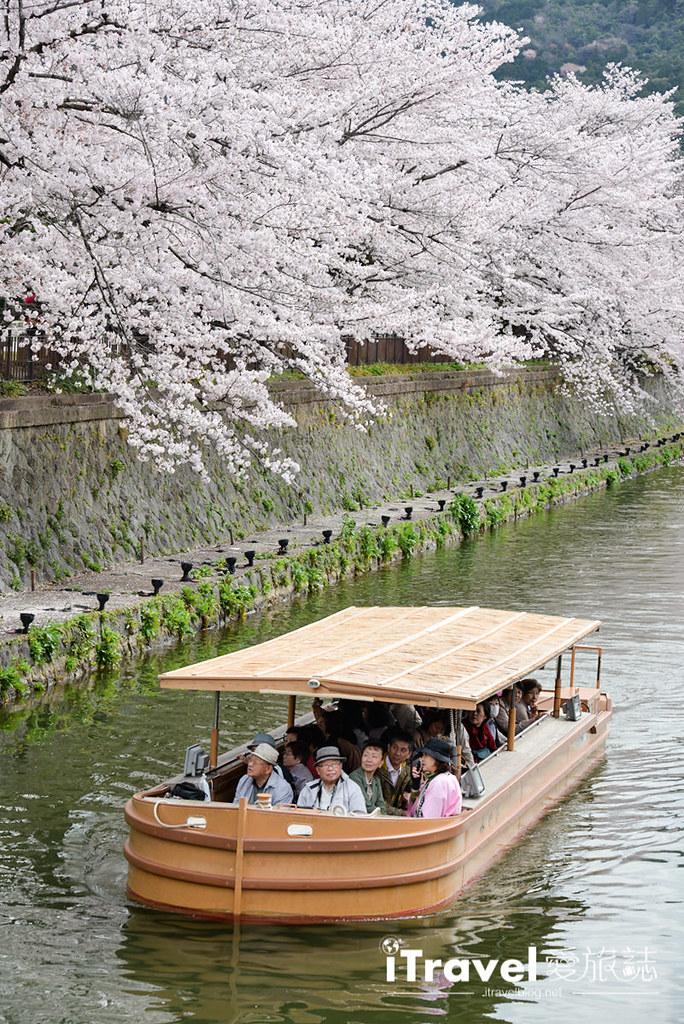 京都赏樱景点 冈崎疏水道 (36)
