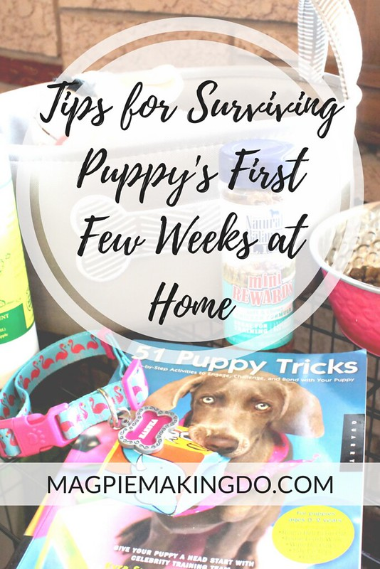 Tips for Surviving Puppy's First Few Weeks at Home