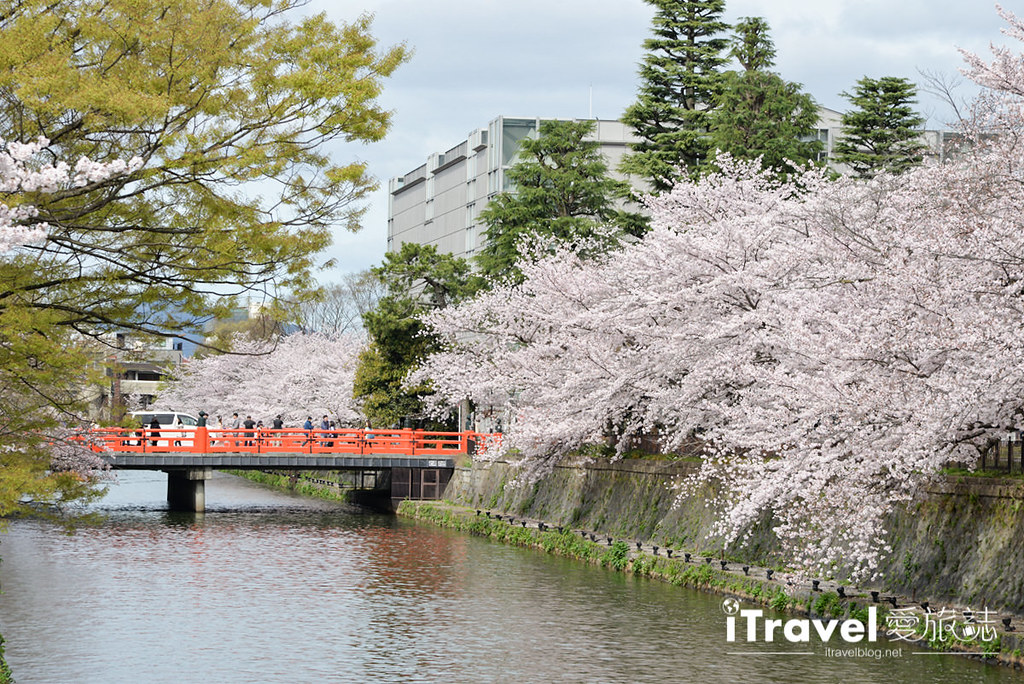 京都賞櫻景點 岡崎疏水道 (29)