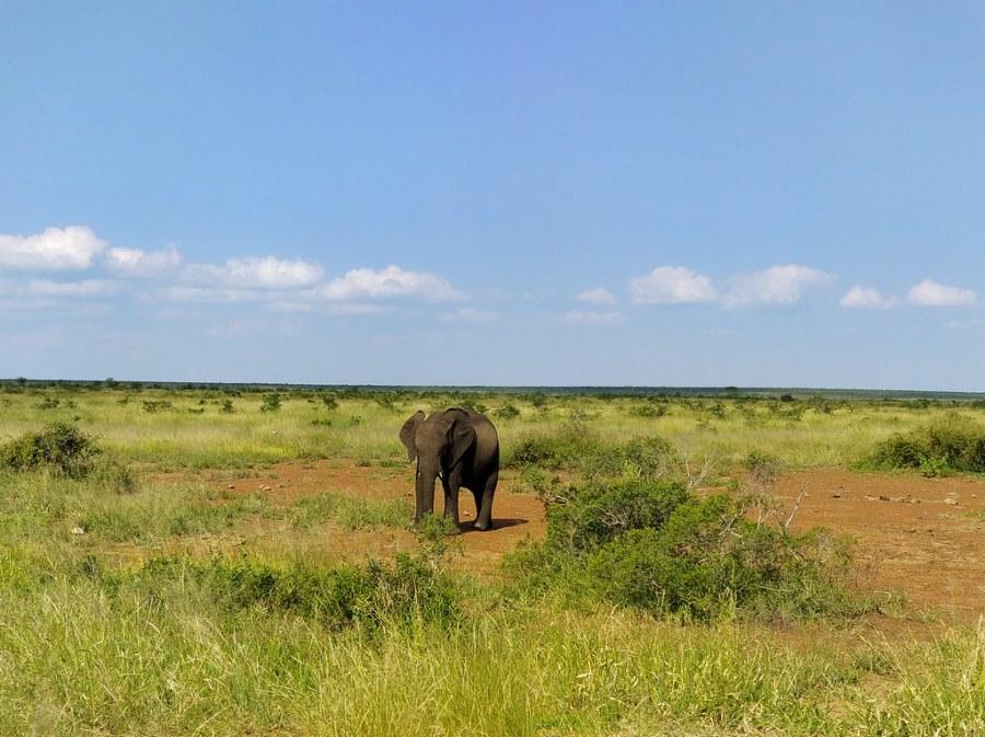 Kruger National Park South Africa Travel Blog Elephants