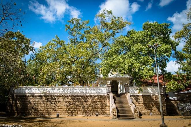 lust-4-life travel blog Sri Lanka Jaya Sri Maha Bodhi-6 anuradhapura