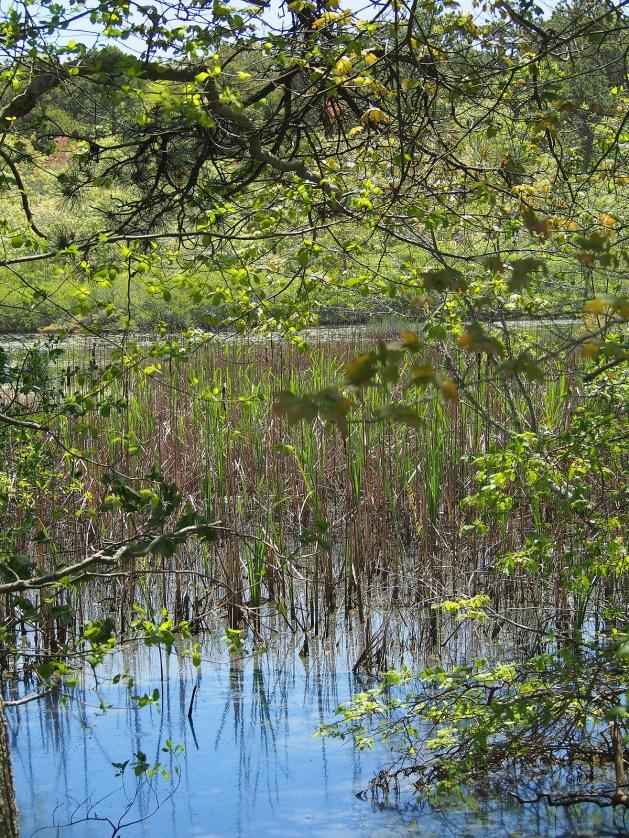 Beech Forest Pond, Cape Cod National Seashore, Massachusetts