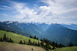 Hurricane Ridge Road in Olympics National Park-034