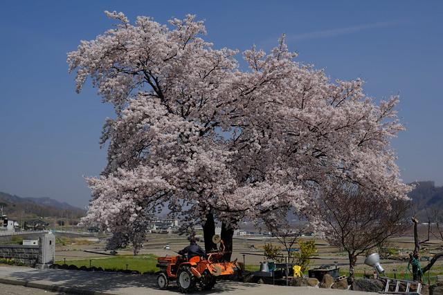 韮崎市折居の農家で
