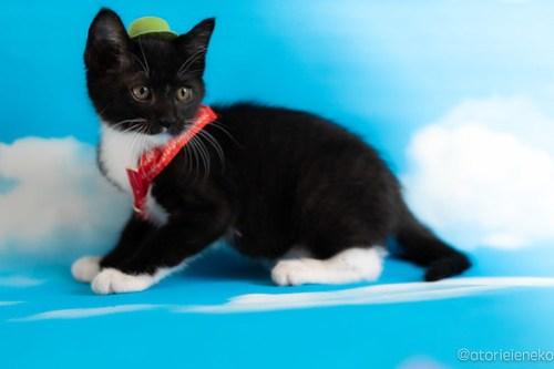アトリエイエネコ Cat Photographer 41032660280_b1572fb923 1日1猫!おおさかねこ俱楽部 里親様募集中のキャッチくん♪ 1日1猫!  里親様募集中 猫写真 猫カフェ 猫 子猫 大阪 初心者 写真 保護猫カフェ 保護猫 ニャンとぴあ スマホ カメラ おおさかねこ倶楽部 Kitten Cute cat