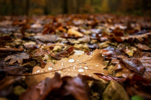 forest after rain Photo by Oliver Hihn on Unsplash