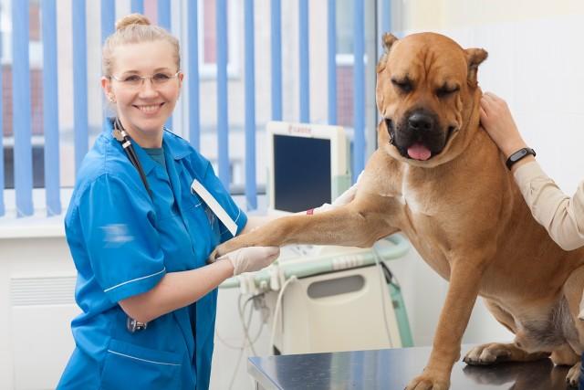 玉ねぎを少し打下手だけで受診する犬