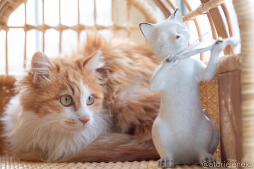 アトリエイエネコ Cat Photographer 40731991925_e798b9d530 1日1猫!高槻ねこのおうち 里親樣募集中のホイップちゃん♪ 1日1猫!  高槻ねこのおうち 里親様募集中 猫写真 猫 子猫 大阪 写真 保護猫 スマホ カメラ Kitten Cute cat