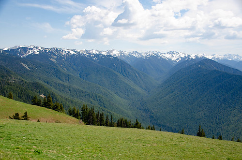 Hurricane Ridge Road in Olympics National Park-001