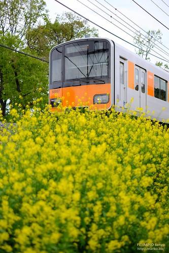 東武東上線 20180416-DSCT1155 (2)