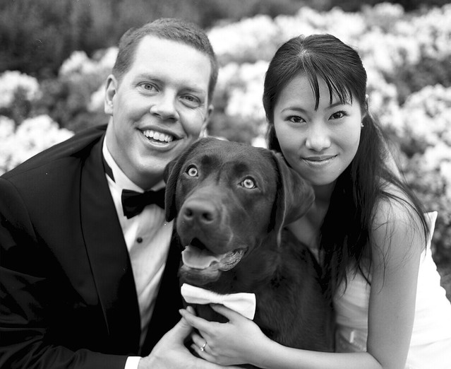 Purebredbreeders.com Reviews Dog Wedding