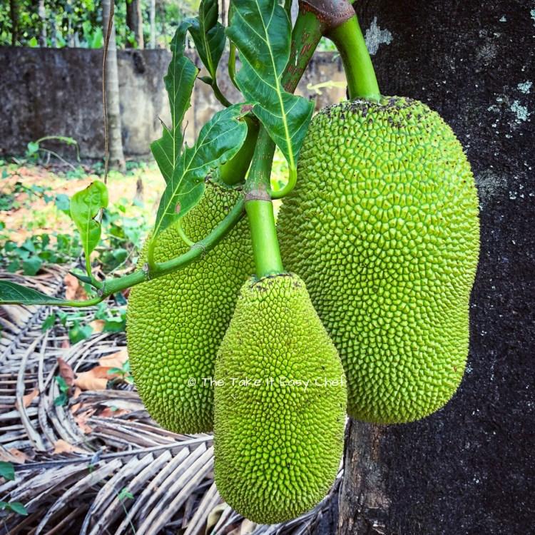 Jackfruits (chakka) on a tree