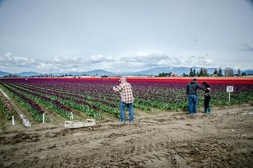 Skagit Valley Tulips-91
