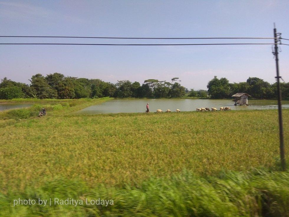 10 TRIP REPORT KERETA API JAYABAYA 1 (JAKARTA-CIREBON) -- KABUPATEN SUBANG 2