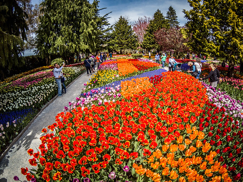 Skagit Valley Tulips-163