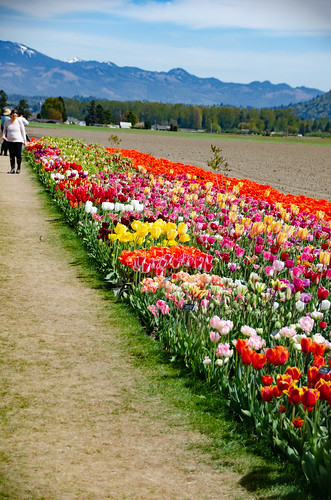 Skagit Valley Tulips-124