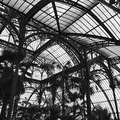 #greenhouses in #blackandwhite #architecture #brussel #brussels #trees #plant #visitbrussels #vsco #vscocam #royal #laeken #belgium #igbelgium #wanderlust #guardiantravelsnaps #guardiancities