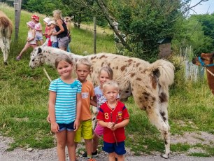 Familiensommer 2018 - Lamas