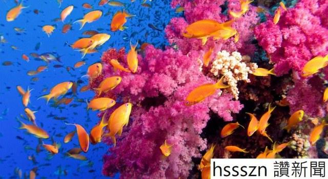 pink-deep-see-oldest-color-1014x553_1014_553